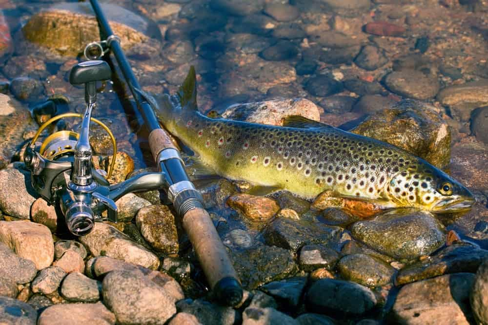 Trout Spinning Reels Versatility