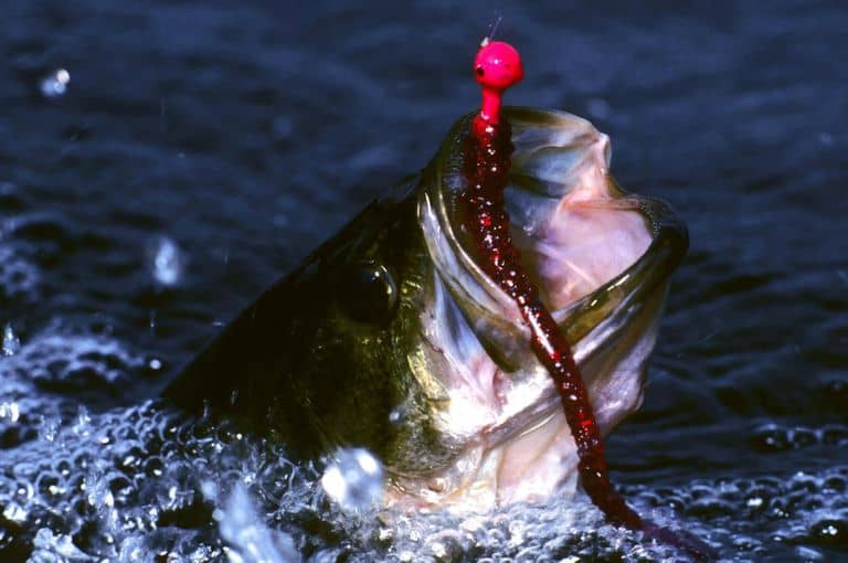 fish bass using plastic worm