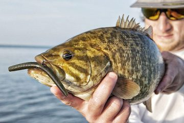 Best Worms for Bass