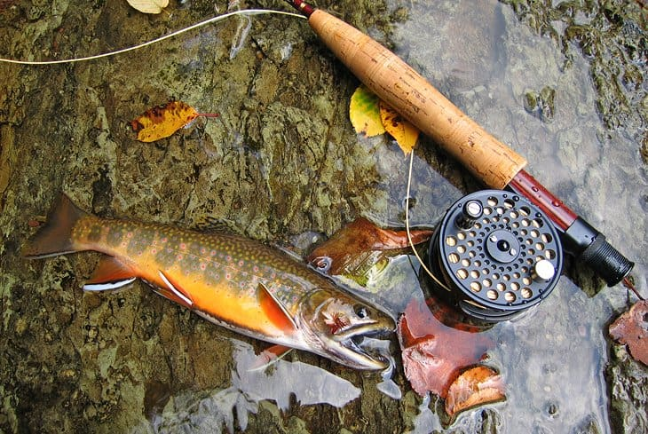 trout fishing line